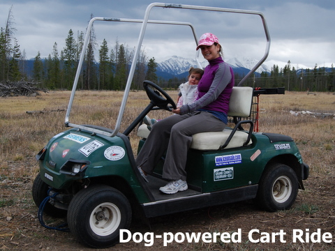 Spring, summer and fall dry land, dog powered cart trips for